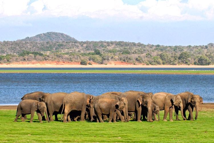 sri-lanka-christi-tours-15n-16d-tour-minneriya-national-park