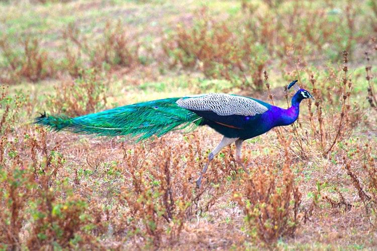 sri-lanka-christi-tours-15n-16d-tour-yala-national-park