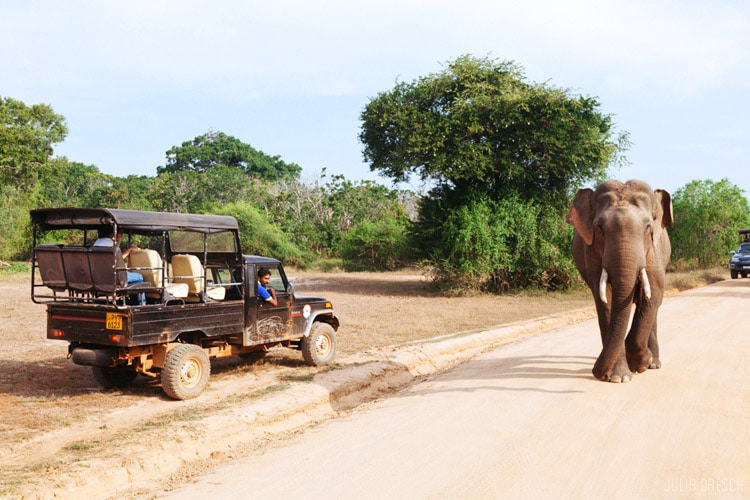 sri-lanka-christi-tours-6n-7d-b-tour-yala-national-park