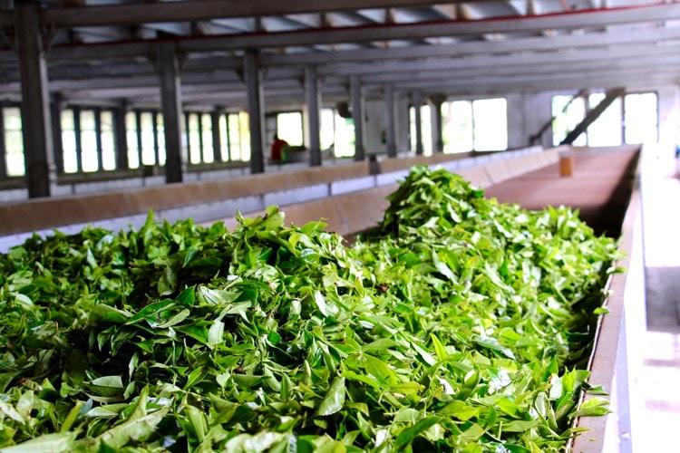 sri-lanka-christi-tours-8n-9d-tour-tea-factory