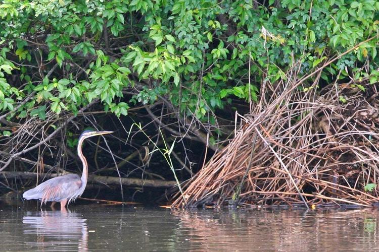sri-lanka-christi-tours-sri-lanka-day-tours-negombo-Muthurajawela-Wetland