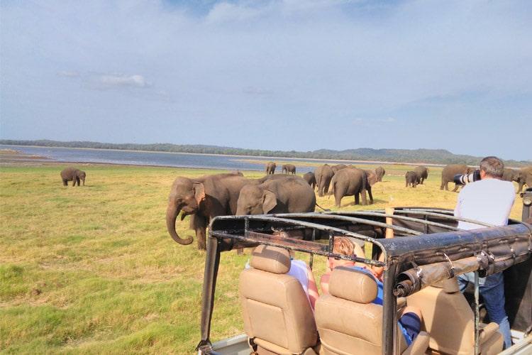 sri-lanka-christi-tours-10n-11d-tour-minneriya-national-park