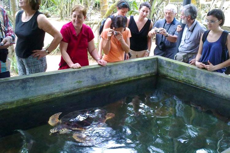 sri-lanka-christi-tours-10n-11d-tour-turtle-hatchery