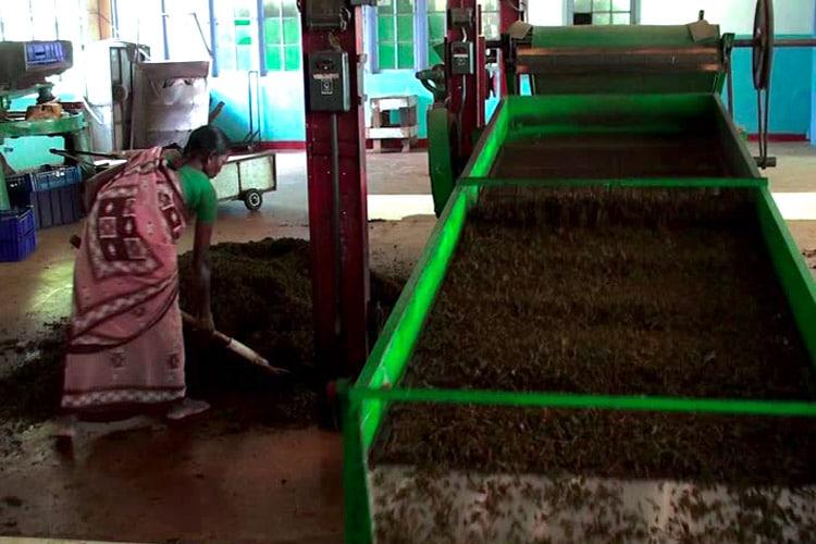 sri-lanka-christi-tours-15n-16d-tour-tea-factory
