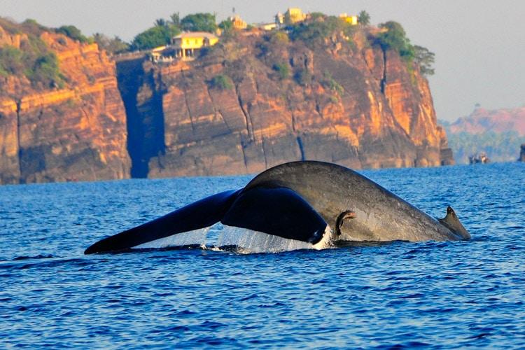 ri-lanka-christi-tours-6n-7d-b-tour-whale-watching