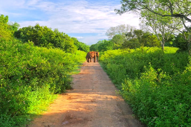 sri-lanka-christi-tours-7n-8d-tour-udawalawe