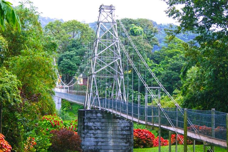 sri-lanka-christi-tours-sri-lanka-day-tours-kandy-peradeniya-botanical-gardens